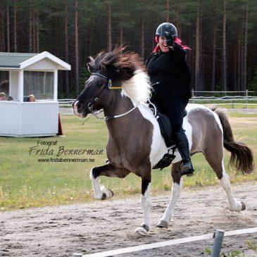 Vårtävling med SM-kval Kraftur Islandshästförening